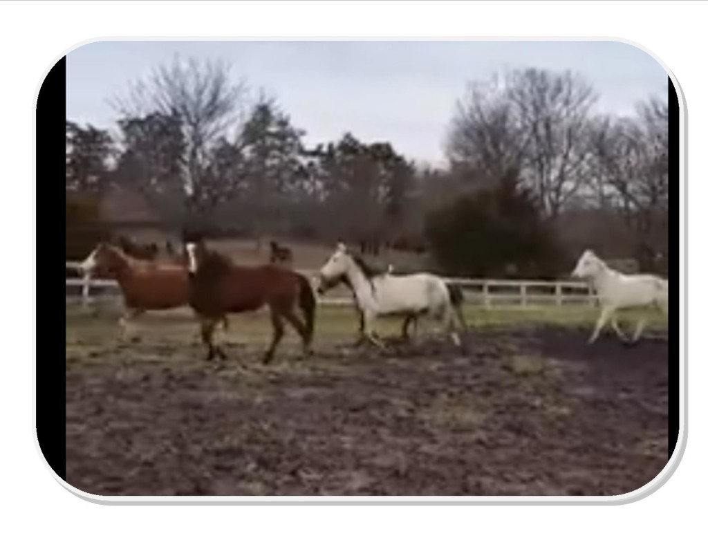 screen shot of jessup horses